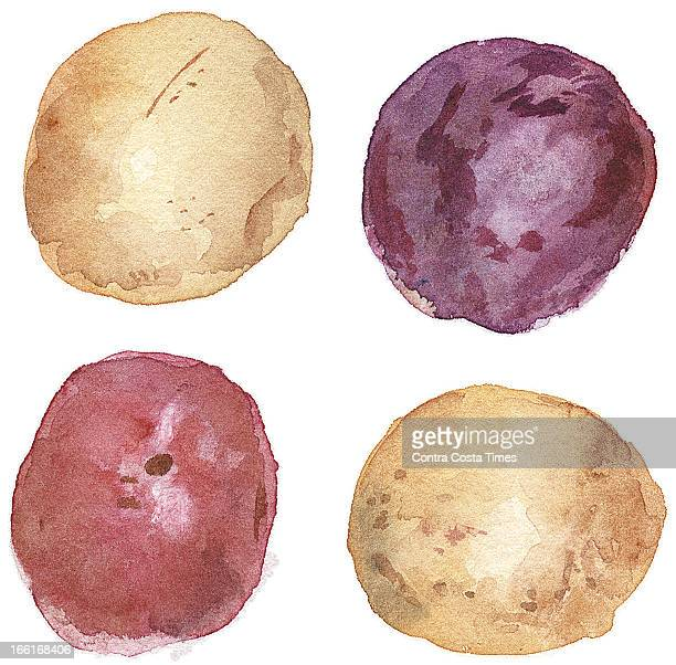 Dave Johnson illustration of four types of new potatoes