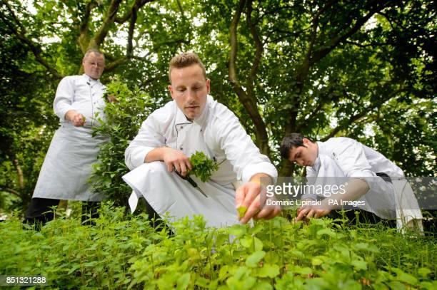 David Ashby Daniele Bartolo Polito and Tolib Rakhmatov gather herbs in the herb garden of the Savoy hotel in central London