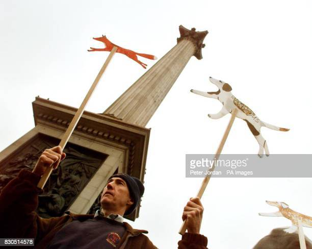 David Cowen of Dalston Cumbria a prohunting demonstrator in London's Trafalgar Square during a mass rally in advance of MPs voting on a bill which...