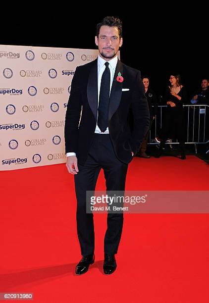 David Gandy attends Battersea Dogs and Cats Home's annual Collars and Coats Gala Ball at Battersea Evolution on November 3 2016 in London United...