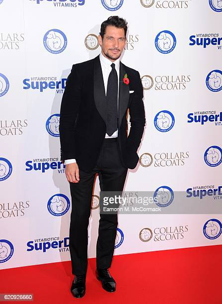David Gandy attends Battersea Dogs and Cats Home's Annual Collars and Coats Gala on November 3 2016 in London United Kingdom
