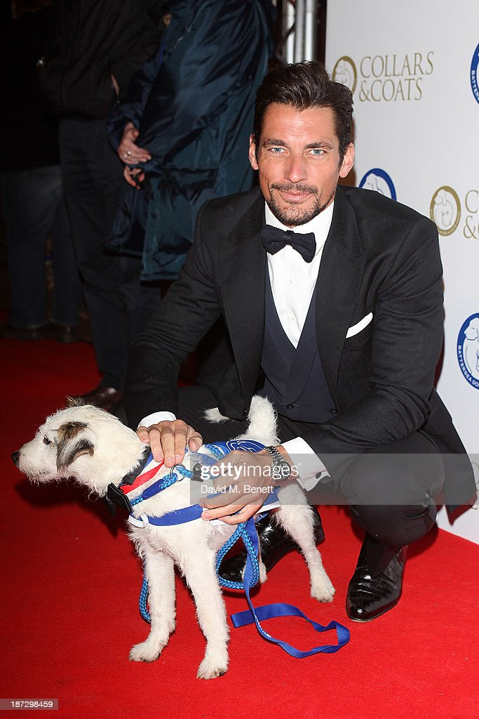 <a gi-track='captionPersonalityLinkClicked' href=/galleries/search?phrase=David+Gandy&family=editorial&specificpeople=4377663 ng-click='$event.stopPropagation()'>David Gandy</a> attends the annual Collars and Coats gala ball in aid of Battersea Dogs & Cats home at Battersea Evolution on November 7, 2013 in London, England.