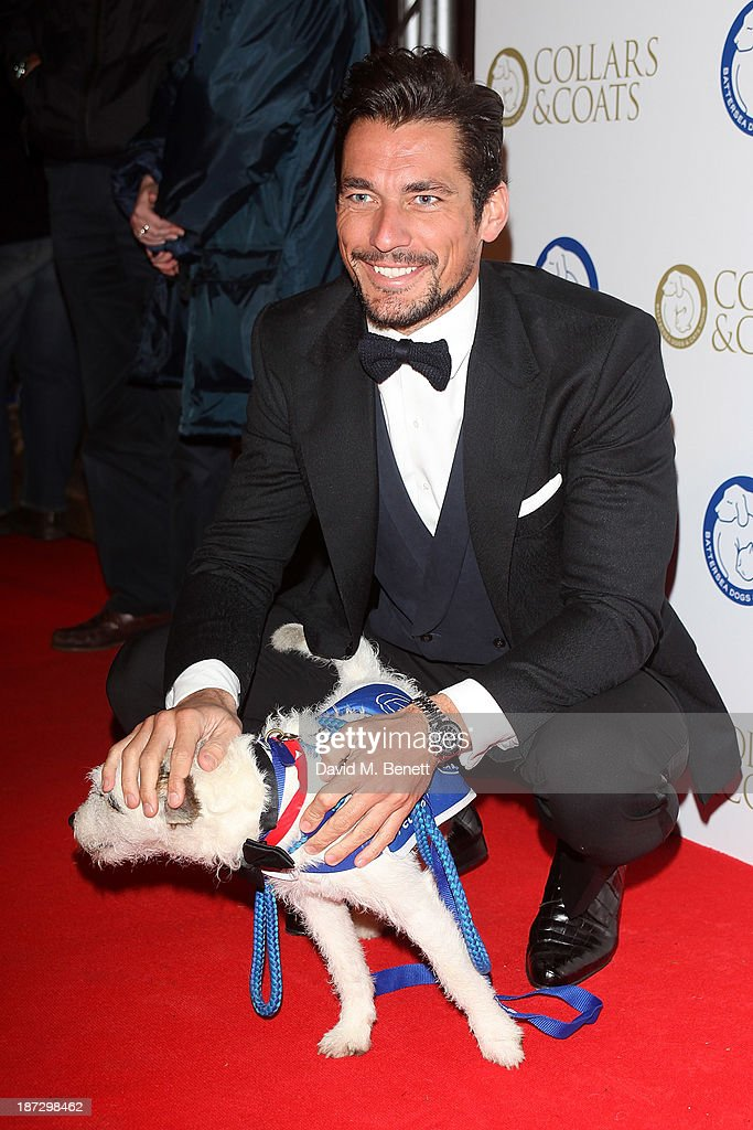 David Gandy attends the annual Collars and Coats gala ball in aid of Battersea Dogs & Cats home at Battersea Evolution on November 7, 2013 in London, England.