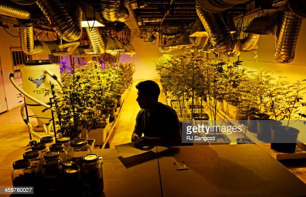 David Martinez manager at 3D Cannabis Center in Denver makes labels in the grow room as he gets for the first of the year when the shop is allowed to...