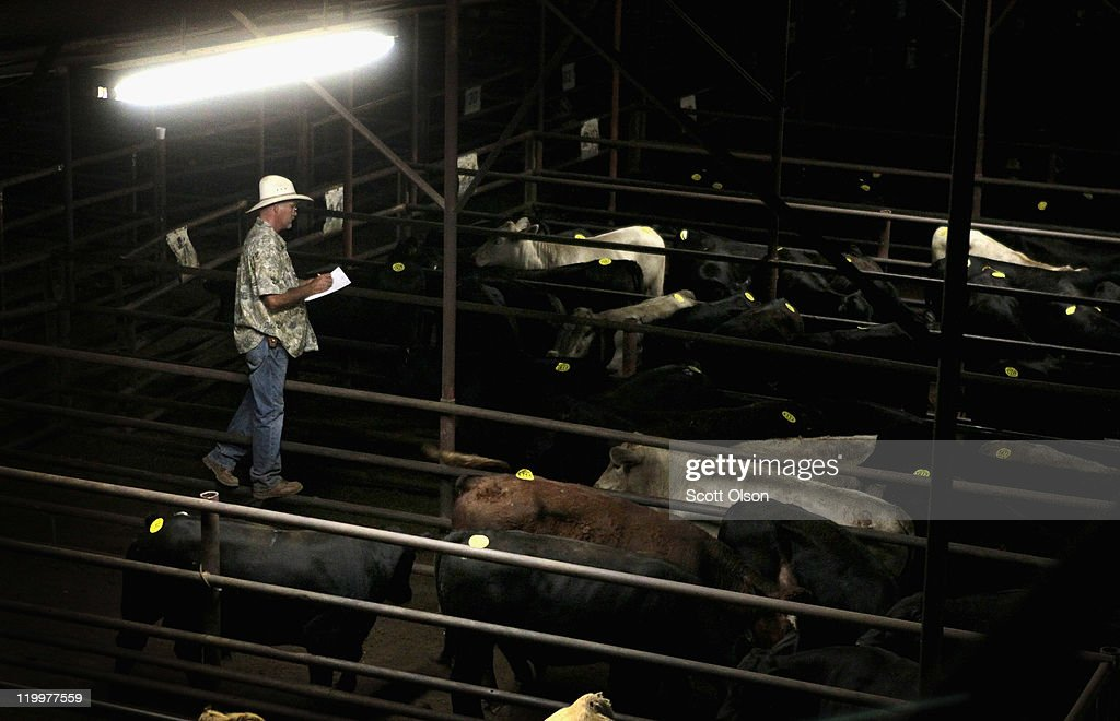 David Mayfield checks a customer's cattle after they were sold at the Abilene Livestock Auction July 27, 2011 in Abilene, Texas. A severe drought in the region has caused shortages of grass, hay and water forcing ranchers to thin their herds. The Abilene Livestock Auction has been selling at least two to three times the number of cattle each week compared to last year. The past nine months have been the driest in Texas since record keeping began in 1895, with 75% of the state classified as 'exceptional drought', the highest classification.