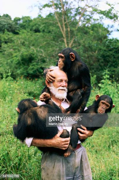 David Siddle Carrying Chimpanzees