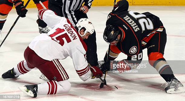 David Steckel of the Anaheim Ducks faces off against Boyd Gordon of the Phoenix Coyotes during the game on April 27 2013 at Honda Center in Anaheim...