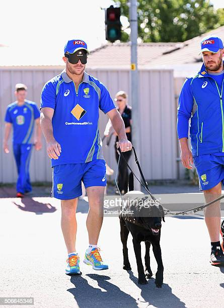 David Warner of Australia walks a guide dog during a training session at Gilles Field on January 25 2016 in Adelaide Australia