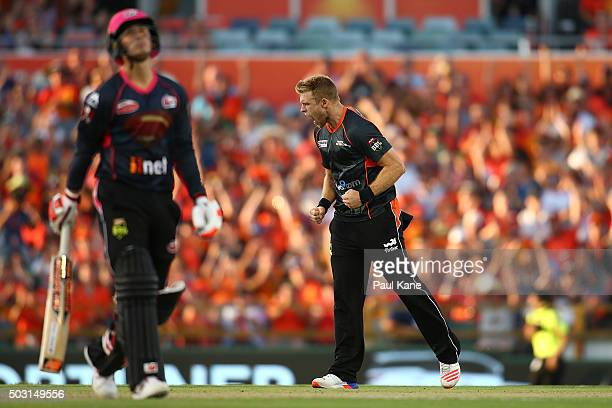 David Willey of the Scorchers celebrates the wicket of Nic Maddinson of the Sixers during the Big Bash League match between Perth Scorchers and...