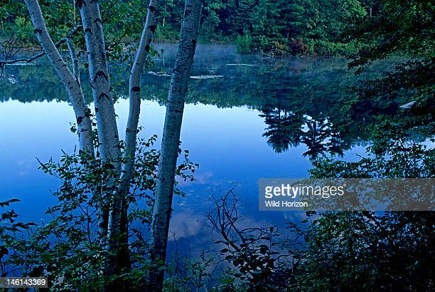 Dawn at Goose Pond added to the Walden Pond State Reservation in 2002 Goose Pond retains the beauty and tranquility that inspired Henry David Thoreau...