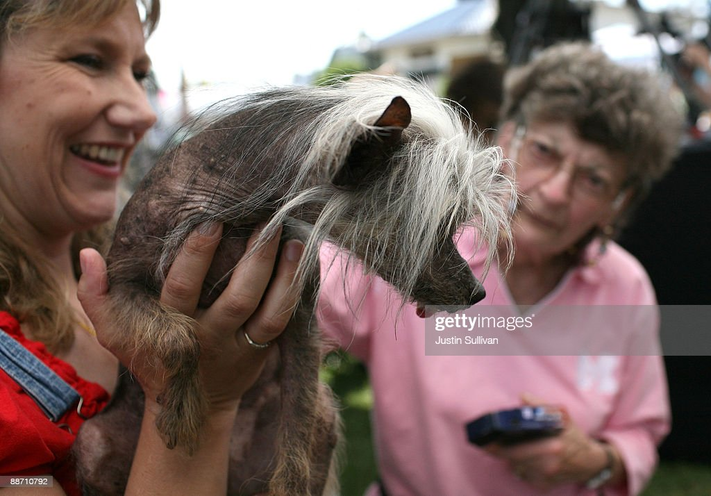 Dawn Goehring of Gatlinburg, Tennesse, holds up her dog Miss Ellie, a Chinese Crested, before the start of the 21st Annual World's Ugliest Dog Contest at the Sonoma-Marin Fair June 26, 2009 in Petaluma, California. Pabst, a four year-old boxer mix won the annual World's Ugliest Dog contest.