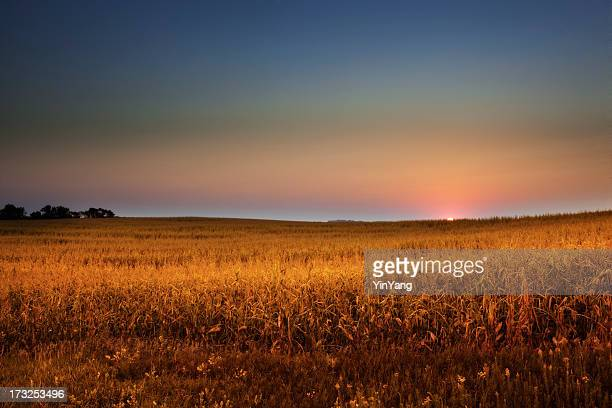 Dawn Over Midwest Cornfield at Golden Harvest