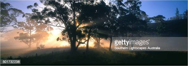 Dawn panorama, Paradise, near Sheffield, central Tasmania.