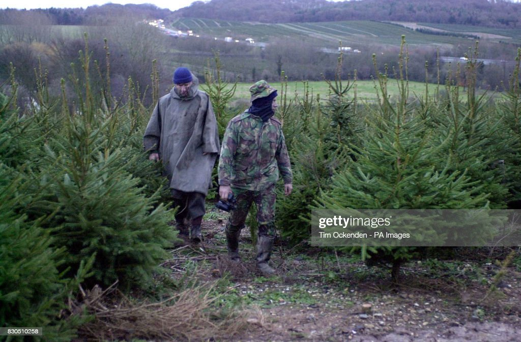 Christmas Trees Patrol Pictures Getty Images - Location Of Christmas Trees