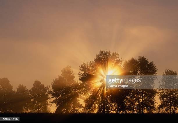 Dawn sunburst through White Ash trees