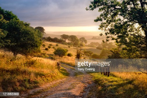 Dawn sunshine in English countryside.