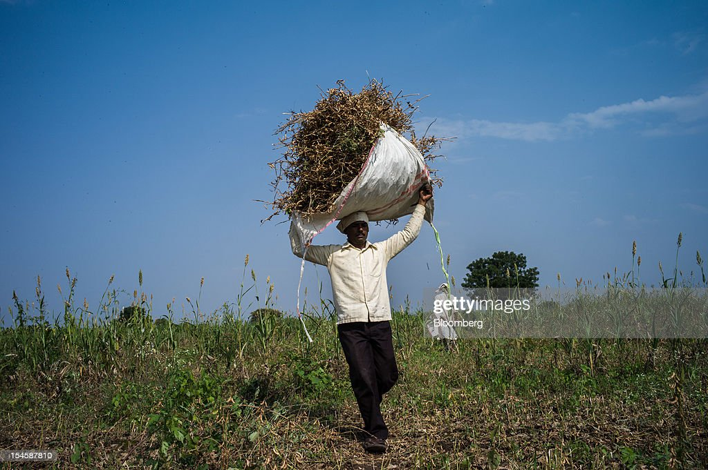 A day laborer carries harvested soybeans at a soybean farm in the district of Burhanpur, Madhya Pradesh, India, on Thursday, Oct. 18, 2012. Global soybean consumption will drop about 3 million metric tons in 2012-2013 as record prices curb demand for the oil made from the oilseed for food and biofuel, Thomas Mielke, executive director of Oil World, said. Photographer: Sanjit Das/Bloomberg via Getty Images
