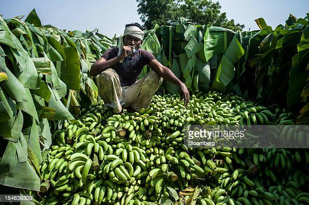 A day laborer smokes a cigarette while he takes a break in a truck during a banana harvest in a field in the district of Burhanpur Madhya Pradesh...