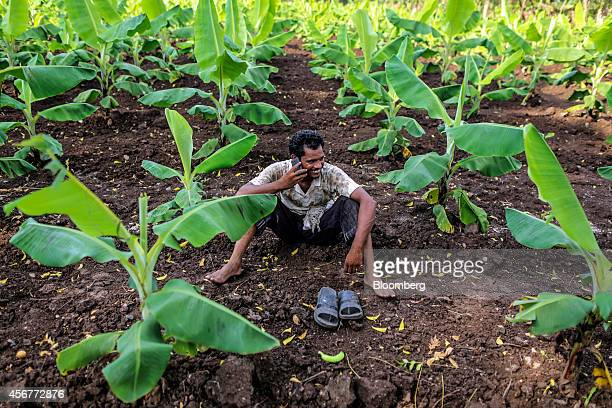 A day laborer talks on a mobile phone as he sits among banana plants during a harvest in a field in Bhusawal Maharashtra India on Saturday Oct 4 2014...