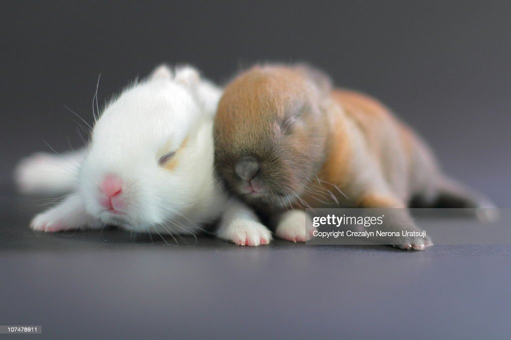 11 Day Old Bunnies