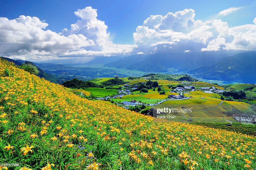 Daylily flower : Stock Photo