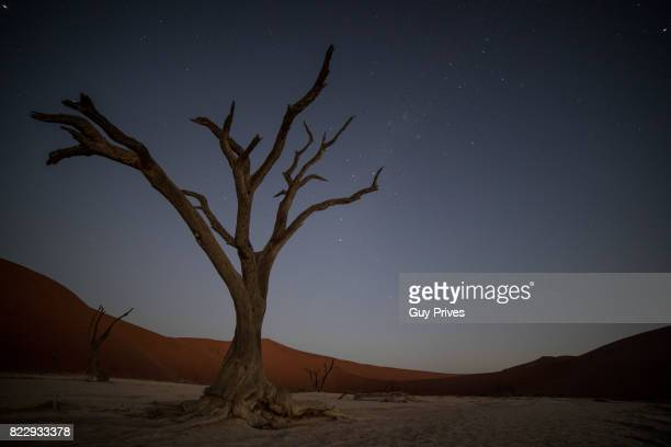Dead Acaia trees at Deadvlei