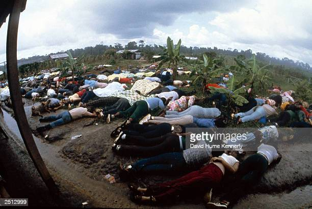 Dead bodies lie near the compound of the People's Temple cult November 18 1978 in Jonestown Guyana after over 900 members of the cult led by Reverend...