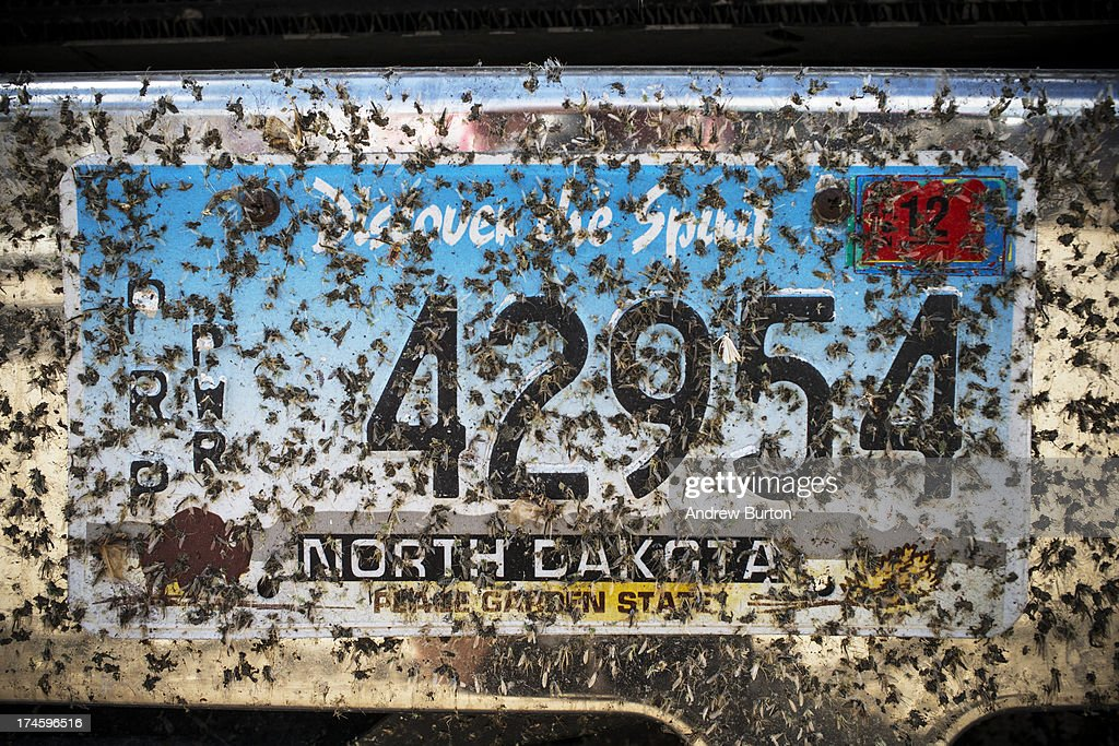 Dead bugs cover a North Dakota license plate at the North Dakota state fair on July 27, 2013 in Williston, North Dakota. The western region of North Dakota has seen a rise in crime, automobile accidents and drug usage recently, due in part to the oil boom which has brought tens of thousands of jobs to the region, lowering state unemployment and bringing a surplus to the state budget.