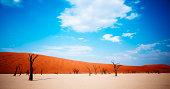 Dead desert trees
