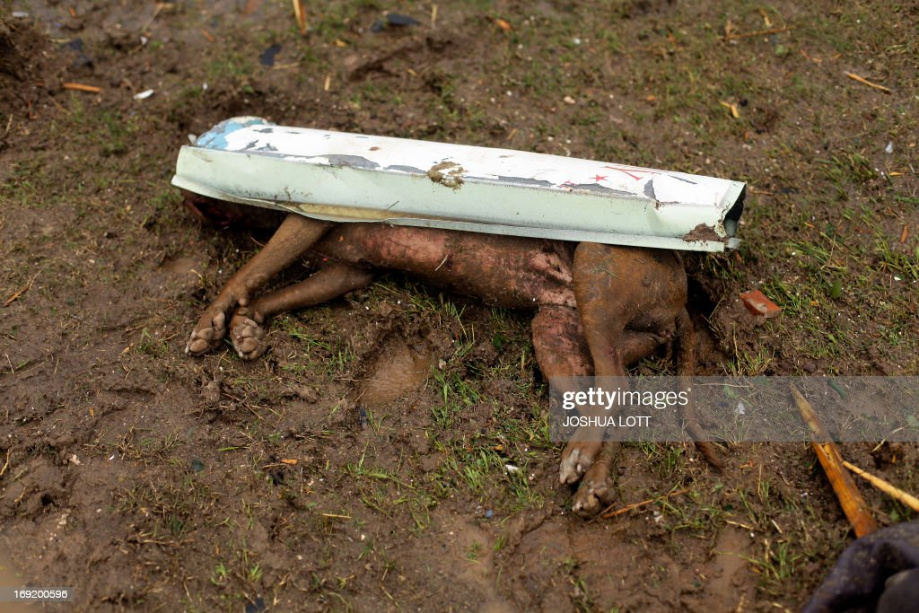 A dead dog lays in front of a destroyed home on May 21, 2013 in Moore, Oklahoma. Families returned to a blasted moonscape that had been an American suburb Tuesday after a monstrous tornado tore through the outskirts of Oklahoma City, killing at least 24 people. Nine children were among the dead and entire neighborhoods vanished, with often the foundations being the only thing left of what used to be houses and cars tossed like toys and heaped in big piles. AFP PHOTO/Joshua LOTT