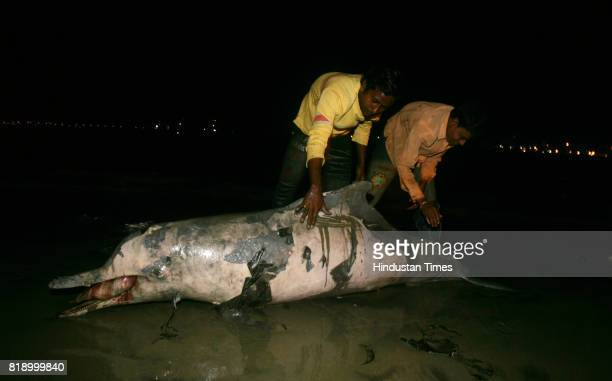 Dead Dolphin in Mumbai A dolphins carcass was found washed ashore at Dadar Chowpatty on Monday Local fishermen claim the 6ftlong dolphin which weighs...