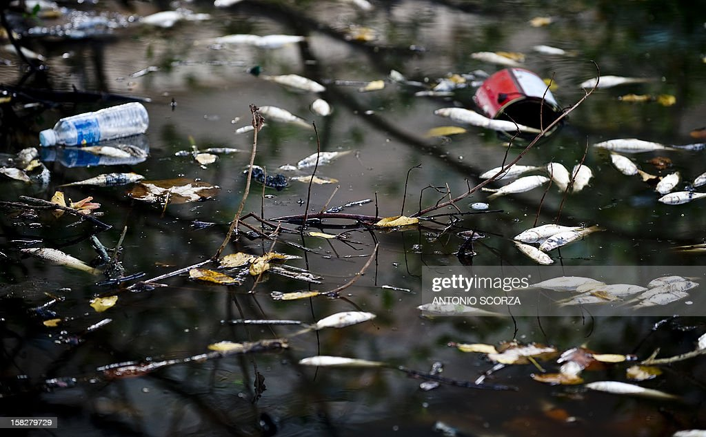 Dead fish float amid trash on the Marapendi lagoon on December 12, 2012 in the Barra da Tijuca area in Rio de Janeiro, Brazil, part of the Olympic belt where stadiums and the Olympic village will be built for the Brazil 2016 Olympic Games. Pollution is considered as the main cause of the 6th wave of fish mortality in the lagoon. AFP PHOTO/ANTONIO SCORZA