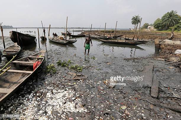 Dead fish lie on the polluted shoreline near a new house under construction with compensation money paid to the local community by the Royal Dutch...