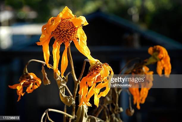 Dead Blumen