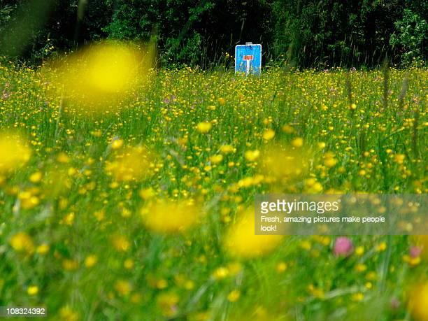 Dead Lane in the Flower Field