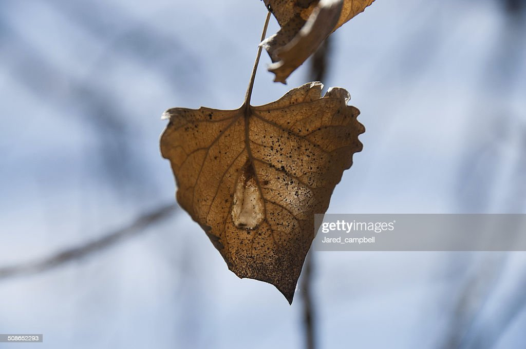 Dead leafs : Stock Photo