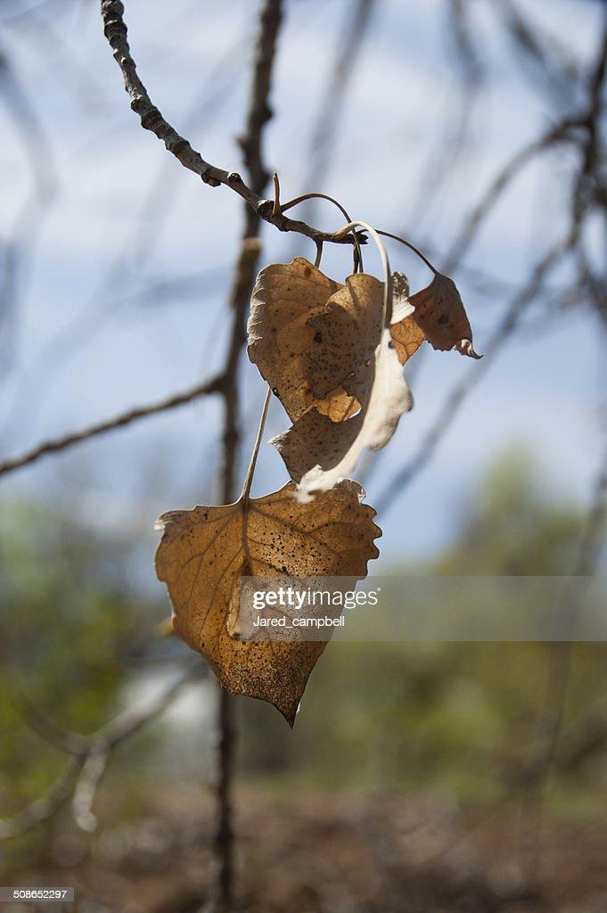 Dead leafs : Stock Photo