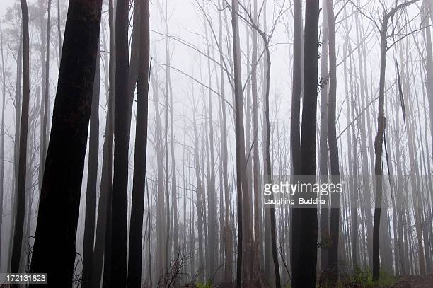 Dead misty forest
