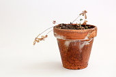 Dead Plant in old pot