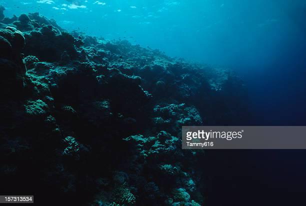 Dead arrecife