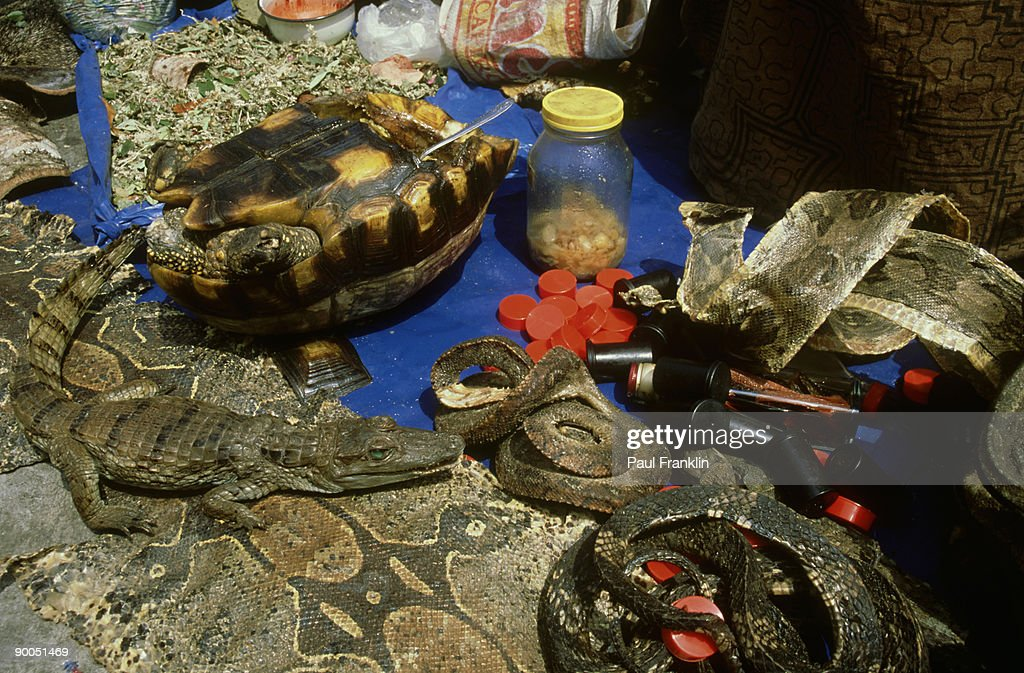 dead reptiles on street: stall. used by shaman  to sell sn ake grease &   other cures. peru
