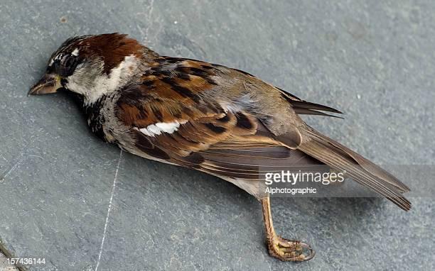 Dead Sperling auf der Terrasse