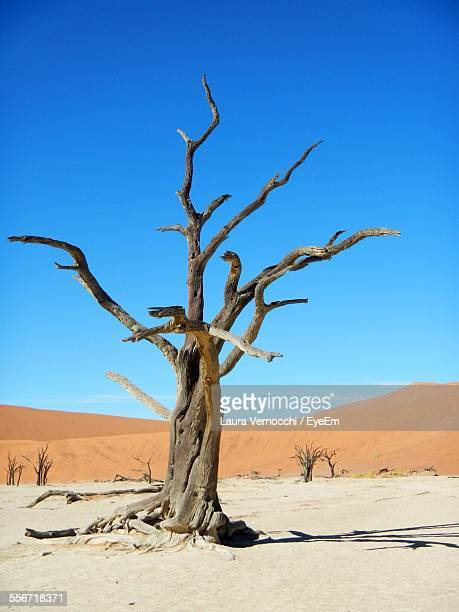 Dead Tree In Desert At Namib-Naukluft National Park Against Clear Blue Sky