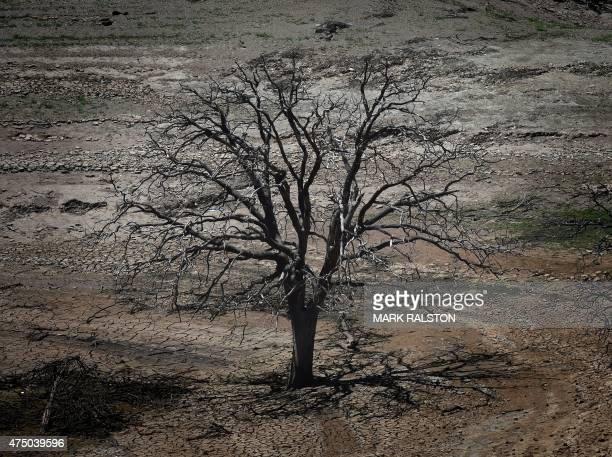 A dead tree is seen on a dried section of the New Melones Lake reservoir which is now at less than 20 percent capacity as a severe drought continues...