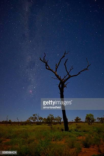 Dead Tree Of Uluru