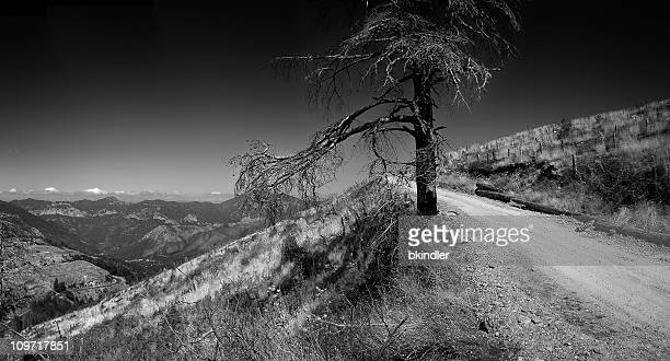 Dead Tree on Rural Mountain Road, Black and White