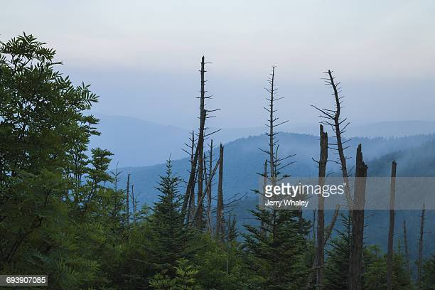 Dead Trees, Clingmans Dome, Great Smoky Mtns NP
