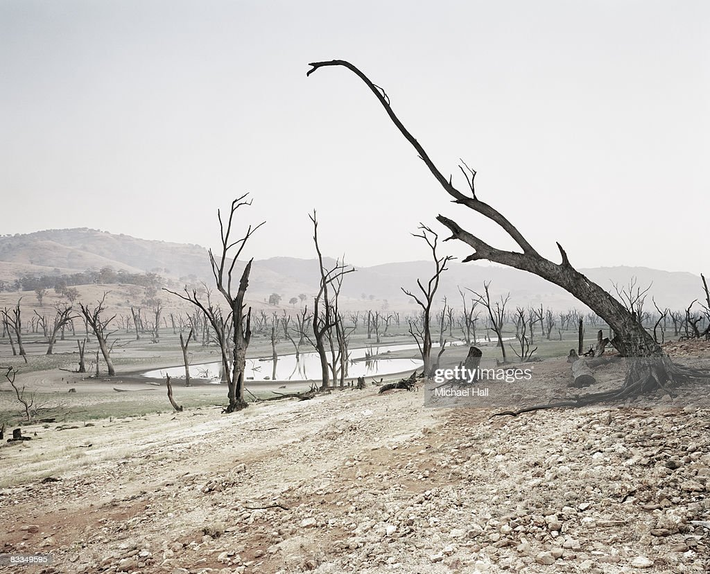 Dead trees in drought ridden landscape : Stock Photo