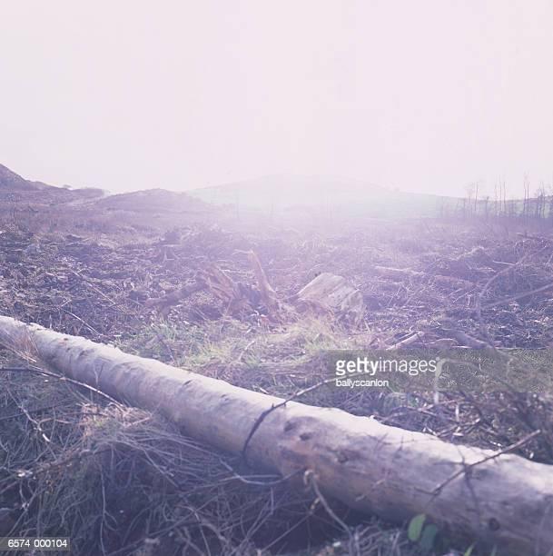 Dead Trees in Field