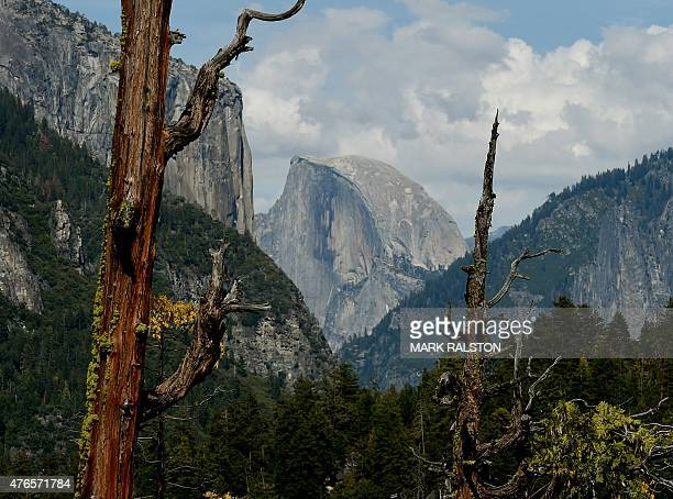 Dead trees in front of the Half Dome monolith at the Yosemite National Park in California on June 3 2015 It is one of America's most popular natural...